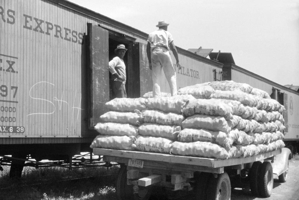 Loading Potatoes at Elizabeth City, NC